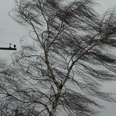 В понедельник в регионе ожидается усиление ветра