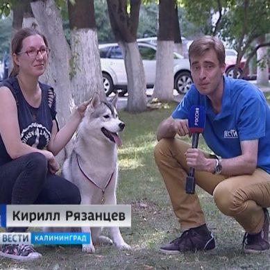 В Калининграде прошла ежегодная выставка собак