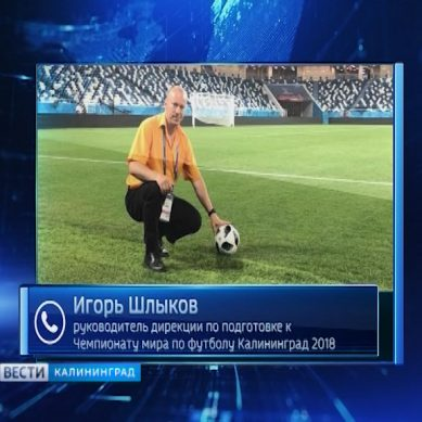 Матчи ЧМ-2018 в Калининграде обошлись без происшествий