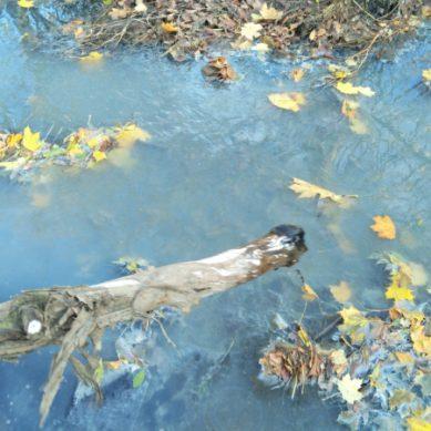Экологи ОНФ проверили ручей Лесной в Калининграде