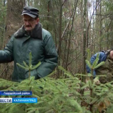 С начала года незаконных вырубок в Калининградской области не зафиксировано