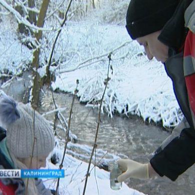 Экологи проверили состояние реки Лесной в Калининграде