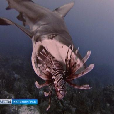 В Музее Мирового океана открылась выставка «100 чудес света: Подводный мир»