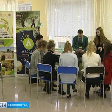 В посёлке Отрадное стартовал форум «Агросело»