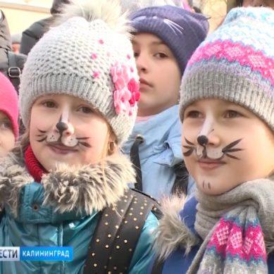 В Зеленоградске отпраздновали День кота