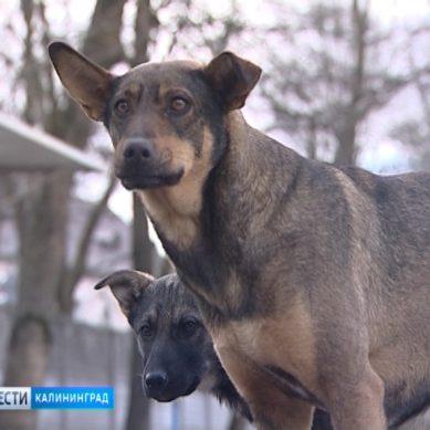Калининградцы жалуются на бездомных собак