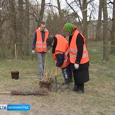 Калининградским дворникам повысят заработную плату