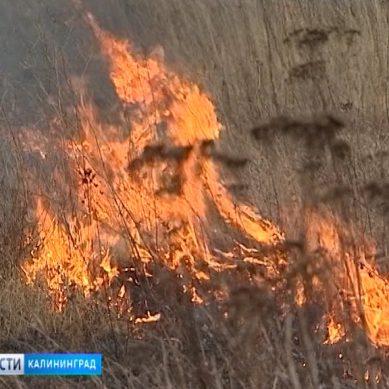 За сутки в Калининградской области зафиксировано 13 случаев возгорания сухостоя