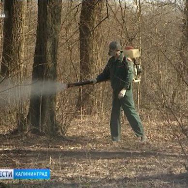 В Калининграде началась обработка зон отдыха от клещей
