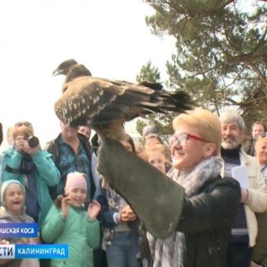 В парке «Куршская коса» прошел экологический праздник «Птичьи перезвоны»