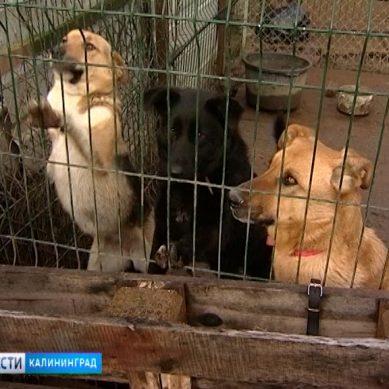 Бездомными животными в Калининградской области займется специализированное госучреждение