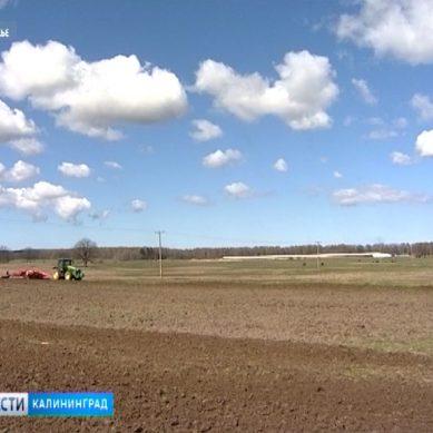 В Калининградской области начинается яровой сев