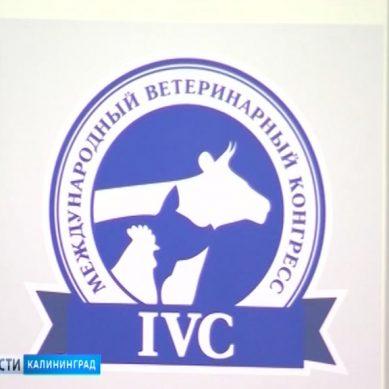 В Светлогорске открылся IX Международный Ветеринарный Конгресс