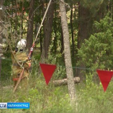 На территории Балтийского ГО запретили посещать леса