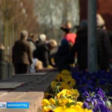 В Калининграде начали высаживать летние цветы