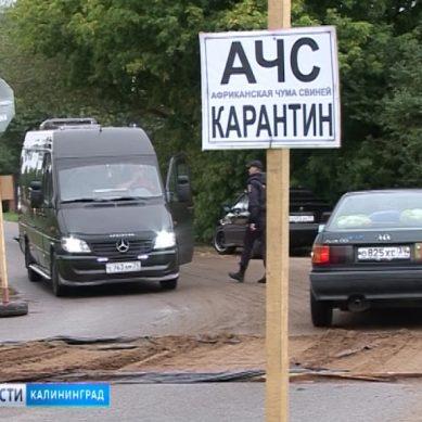 Карантин по АЧС введен в Зеленоградском городском округе