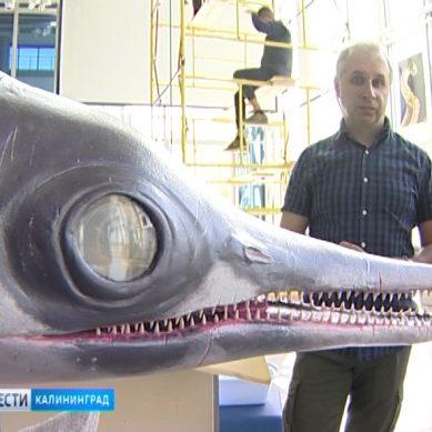 В Музее Мирового океана готовят к открытию новую выставку